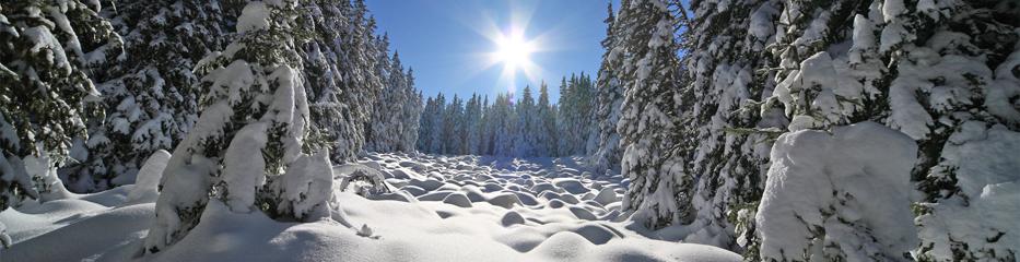 Bungalowparken in wintersportgebieden