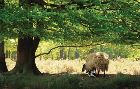 Bungalowpark Boerhaarsveld