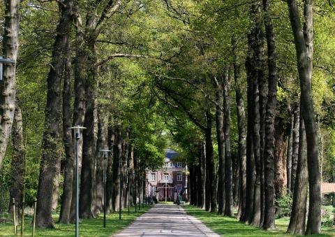 Bungalowpark Bavelds Dennen
